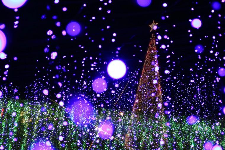 あしかがフラワーパーク フラワーファンタジー 光の花の庭