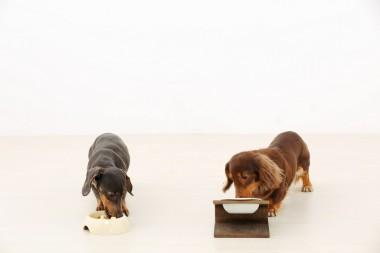 dogeatingdinner20151208